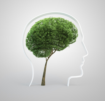 La valoración neuropsicológica y el efecto de la escolaridad, edad y cultura