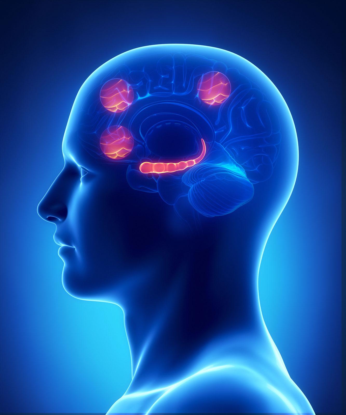 Modelos neuropsicológicos e instrumentos de evaluación de la memoria semántica