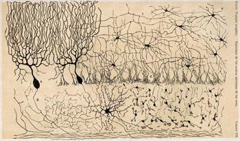 Neuropsicología: la Calidad de Vida
